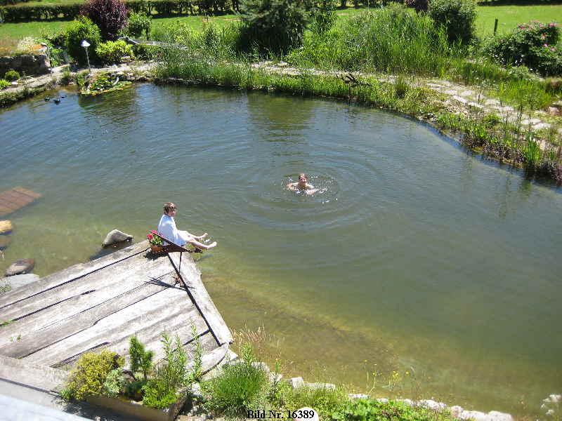 Schwimmteich bilder schwimmteich bild schwimmteich for Peces para estanque de jardin